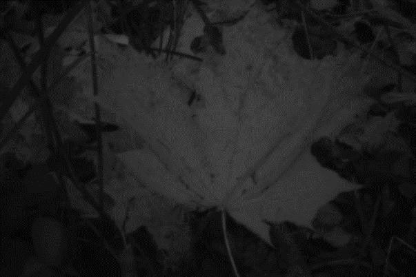 jesień obscura