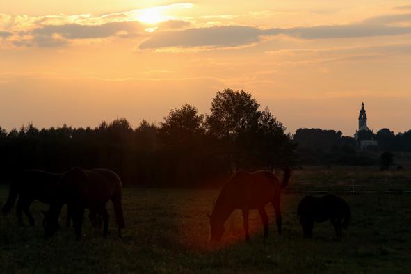 konie słonie