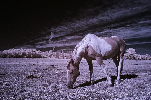 ir koń