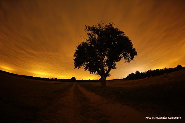 drzewo noc kk