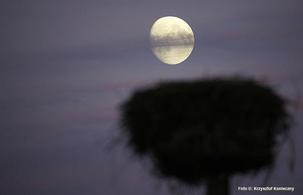 księżyc w gnieździe