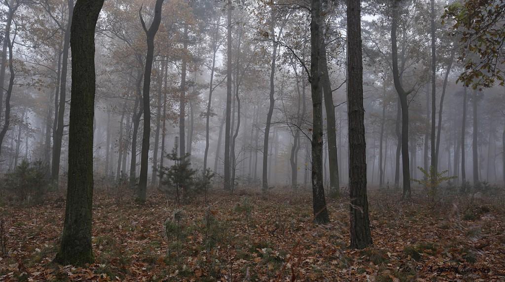 pełnia mgły kk