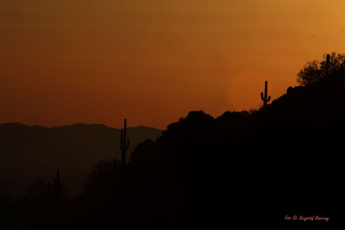 konieczny kaktusy arizona16