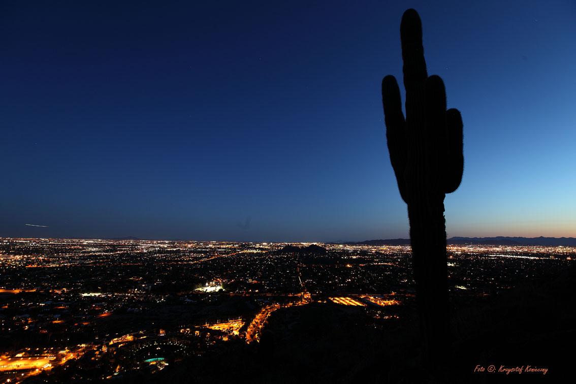 konieczny kaktusy arizona18