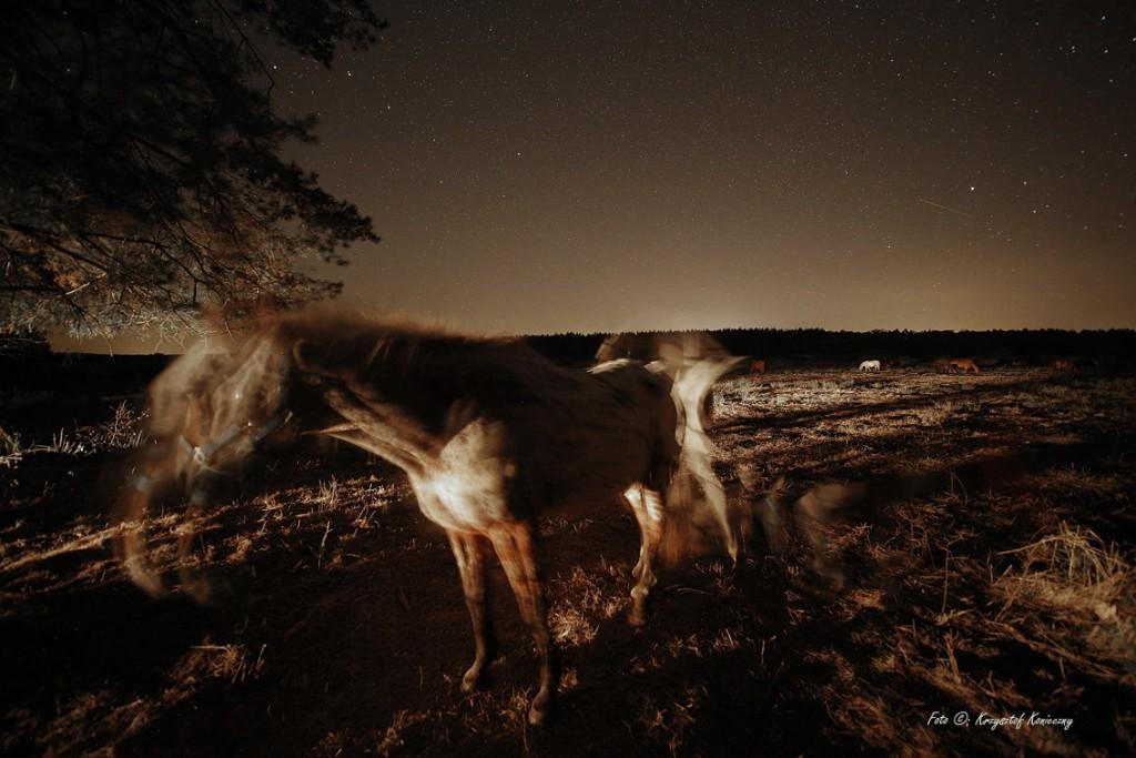 konieczny konie noc